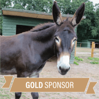 Sponsor DAISY - Gold Package £25 (printed pack)